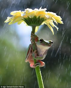 The frogs were determined to stay out of the rain