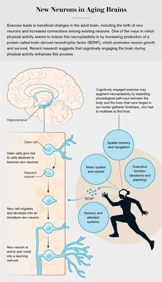 In the researchers announced a series of discoveries that would upend a bedrock tenet of neuroscience. For decades the mature brain was understood to be incapable of growing new neurons. Brain Science, Brain Gym, Your Brain, Brain Diagram, Yoga For Seniors, Brain Structure, Hunter Gatherer, Heath And Fitness, Scientific American