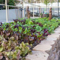 culinary-1 Rogers Gardens, Grow Your Own Food, Urban Farming, Plant Care, Contemporary Decor, Garden Styles, Garden Inspiration, The Creator, Celebrities