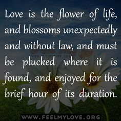 Love is the flower of life