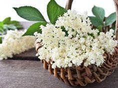 Holunderblüten - gesund und köstlich