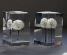 Real Dandelions Turned Into Gorgeous OLED Lights