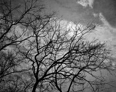 Halloween moon and a naked tree. Halloween Moon, Bare Tree, Moon Photography, Haunted Mansion, Halloween Decorations, Sky, Black And White, Outdoor, Fall Trees