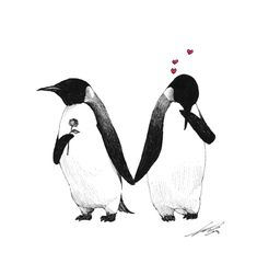 Drawings 2013 - 3 by Sungwon , via Behance Such a cute picture. Pinguin Drawing, Pinguin Tattoo, All About Penguins, Cute Penguins, Penguin Art, Penguin Love, Pinguin Illustration, Penguin Pictures, Love Confessions