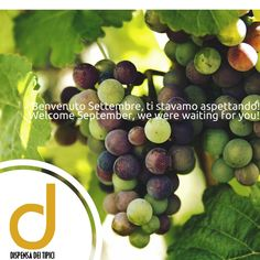 Benvenuto Settembre, ti stavamo aspettando! [IT]  Welcome September, we were waiting for you! [EN]  #dispensadeitipici #vendemmia #settembre #harvest #september #grape #uva #winelover #winelovers