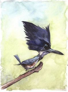 """""""Belted Kingfisher""""...Watercolor Painting 11"""" x 14"""" Price includes shipping and handling in the Continental U.S only Shipping outside of the Continental U.S.? Please email us and we will get the lowes"""
