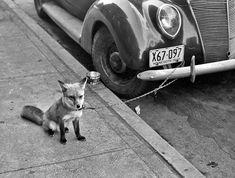 fotografias de animales de principios de siglo xx