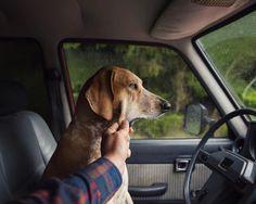 Фотограф взял собаку изприюта ипрокатил повсей Америке