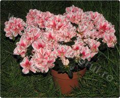 Shrubs, Floral Wreath, Wreaths, Garden, Plant, Floral Crown, Garten, Door Wreaths, Lawn And Garden