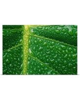 Image result for green leaf with water drops images poster wall