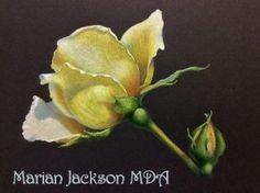 Marian Jackson MDA