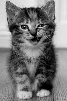 Un petit chat est celui qui à besoin de massages a tout les jours!
