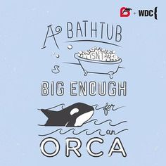 We are taking a stance against Orca captivity, and removing the Orca from our SeaSquirt Bath Toy Collection. From today thru Monday (11/16), 100% of all orders made on Munchkin.com will be donated to the Whale & Dolphin Conservation. Click the link in our profile to learn more + shop for a cause. #OrcasLiveInOceans #Orcas #itsthegivingthings
