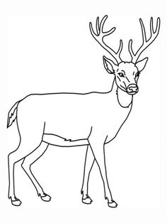 Deer Coloring Page, add pipe cleaner antlers! | Recipes ...