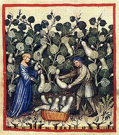 Tacuinum Sanitatis, ca. 1400 Calabash or bottle gourds