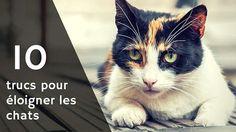 10-trucs-pour-eloigner-les-chats