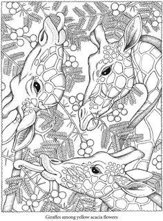 Free coloring page «coloring-adult-giraffes-heads».