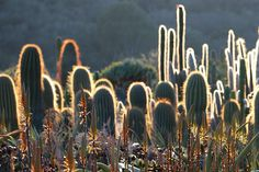 12 Reasons to Love Cactus from succulent author Debra Lee Baldwin Kinds Of Cactus, This Is Us, My Love, Water Lilies, Cactus Plants, Container Gardening, Succulents, Author, Birds