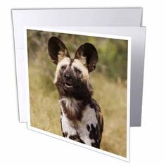 3dRose African Wild Dog in captivity, Harnas Wildlife Foundation, Namibia., Greeting Cards, 6 x 6 inches, set of 12