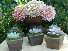 Succulent Wedding Favor Succulent Bridal Shower Favor by tobieanne, $39.00 #etsy