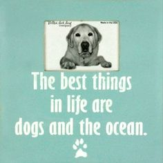 Dog frame for dog AND ocean lovers. The best things in life are dogs and the ocean. Beach and Ocean Quotes: http://www.pinterest.com/complcoastal/beach-quotes-ocean-quotes-and-sayings-inspired-by-/