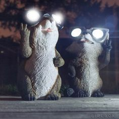 Garden Critter Solar Light: These are two Gopher and Raccoon that you don't want to kick out of your lawn. The adorable little creatures light up your garden or pathway through their goggles, using solar power.