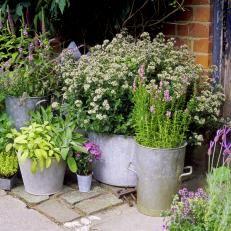 47 Container Gardening Photos   HGTV