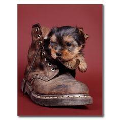Cute yorkie puppy dog & boot postcard
