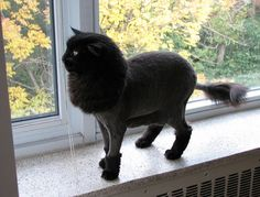 50 Cats With Lion Haircuts - BuzzFeed Mobile