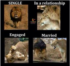 Lions, relationships, silly memes