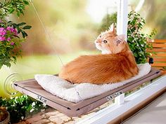Window Mount Cat Bed Pet Hammock As Seen On TV Sunny Seat Pet Beds With Color Box Package Free Shipping Cats love to chase the sun, give them the perfect bed to capture the warmth of the sun rays. Get