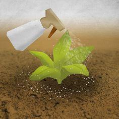 Get Rid of Garden Slugs - wikiHow