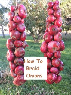 How to braid onions to store for the winter. This tutorial has quite a few pictures, in case you've ever wanted to know how it's done. It's much easier than I once thought, and now I know my onions are getting the proper air to keep them from spoiling.