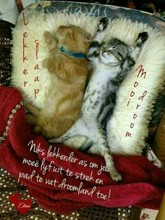 Good Night Greetings, Good Night Messages, Good Night Wishes, Good Night Sweet Dreams, Good Night Quotes, Day Wishes, Good Morning Beautiful Gif, Afrikaanse Quotes, Good Night Blessings