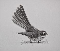 FaerySarah: Hello li'l Fantail Sketch Birdhouse In Your Soul, Robin Tattoo, Clematis Flower, New Zealand Art, Nz Art, Natural Instinct, Nature Illustration, Black And White Drawing, Leaf Art