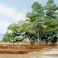 Blackwater The New Forest. Watercolour 36x36cms Blackdown Revisited The New Forest. Watercolour. 36x36cms Ardingly. Wa...