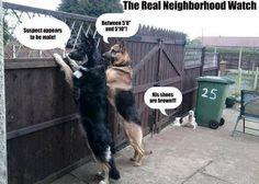 The real neighborhood watch http://ibeebz.com