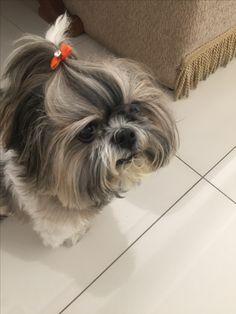 Sou a Ayla e faço acupuntura em casa para tirar minha dor do ombro. Eu sei que sou lindaaa!! www.vetterapias.com.br