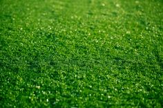 WholesaleTurf is a huge supplier of synthetic grass for recreation regions and also landscaping. With any kind of request of customers, they are delighted to supply any demand and also make their consumer satisfied with the service.