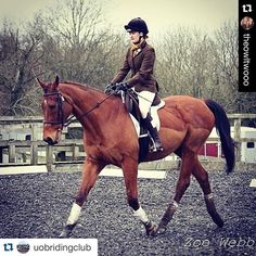 #Repost @uobridingclub with @repostapp. ・・・ #Repost @theowltwooo Dressage on my enormous horse #horse #uobridingclub #dressage #bucs #equestrian #riding @tottie_clothing @wildpacks  #troton