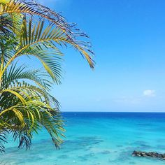 Palm fringed views at Cobblers Cove.  #cobblerscove #barbados