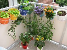 Terrazzo o balcone? Anche un piccolo spazio può diventare un angolo di orto con…