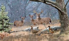 whitetail deer art painting First Snow