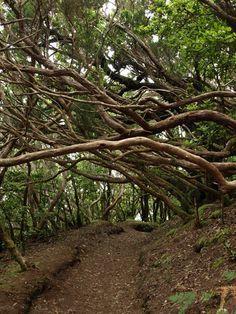 Bosque encantado en el Parque Rural de Anaga en Tenerife
