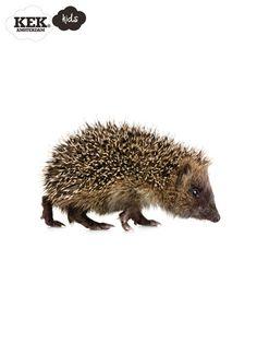 Muursticker dieren egel Forest Friends Hedgehog.