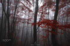 Misty Autumn - A nice atmosphere in the woods during a misty autumn morning. Hope you like it