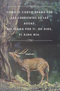COMO el ciervo brama por las corrientes de las aguas,Asi clama por ti, oh Dios, el alma mia.   - Salmo 42:1