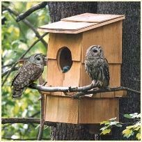 Barred owls nesting box - image