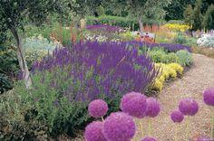 Lambley Garden & Nursery, north of Ballarat, Australia Australian Garden, Garden Visits, Plants, Olive Trees For Sale, Border Plants, Dry Garden, Perennial Garden, Purple Garden, Drought Tolerant Garden