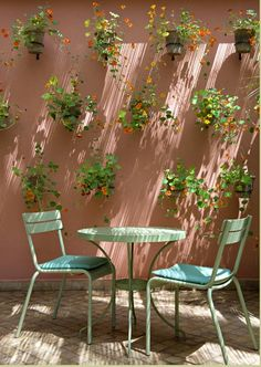Wish I Could Do A Pink Wall With Large Plantings Of Lantana, Nasturtiums,  Bulbine